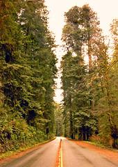 Newton B Drury Scenic Parkway (kmanohar) Tags: california northerncalifornia highway worldheritagesite director humboldtcounty highway101 redwoodnationalpark us101 drury scenichighway ushighway101 northerncaliforniacoast nationalparksservice temperaterainforest prairiecreekstatepark prairiecreek redwoodpark prairiecreekredwoods redwoodcoast humboldtcountyca humboldtcountycalifornia prairiecreekredwoodsstatepark redwoodsstatepark pacificrainforest savetheredwoodsleague klamathcalifornia scenicparkway prairiecreekpark california101 internationalbiospherereserve redwoodpreserve newtonbdruryscenicparkway californiarainforest northwestrainforest redwoodreserve newtonbdrury newtondrury californiadrury newtonbdruryscenichighway drurycalifornia savetheredwoodsleage