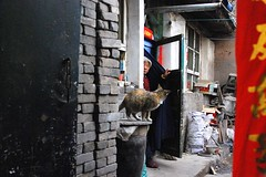 The Lady and the Cat (rollier) Tags: colors cat oldwoman 中国 oldhome chinachine
