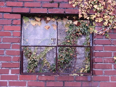 broken window with vines