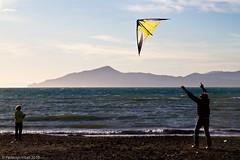 Father and son (- Federico Vitali -) Tags: kite fatherandson sestrilevante aquilone padreefiglio golfodeltigullio