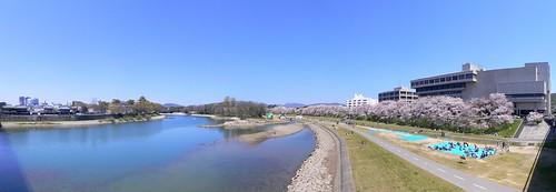 旭川さくら道 #5
