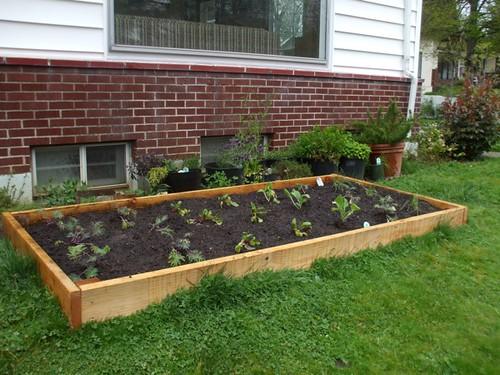 2010 garden - week 2