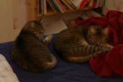 mavis+leo=naps
