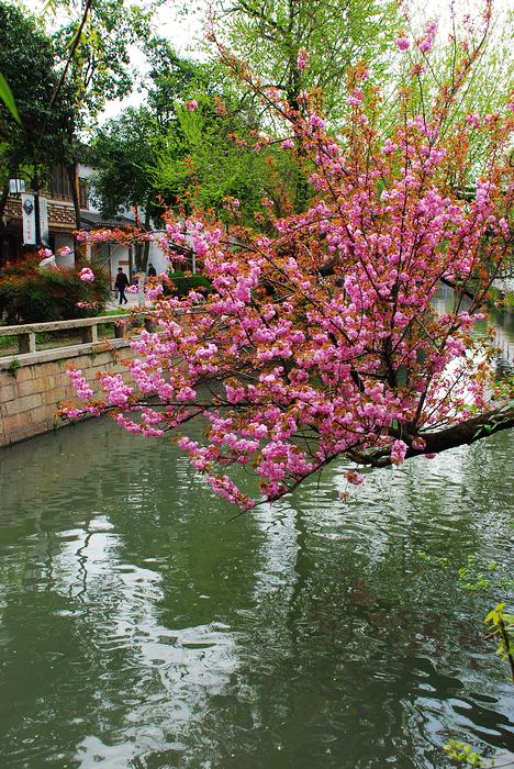 春暖花开平江路