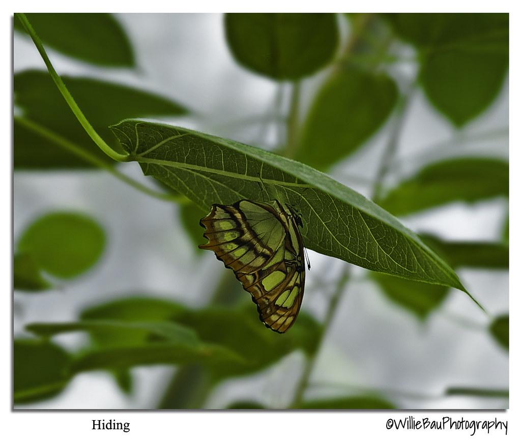 Hiding.