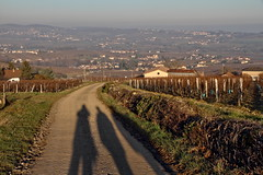 The shadows (Chemose) Tags: vigne vineyard vine vignoble vallamartinien pouilly solutrépouilly landscape paysage burgundy bourgogne bourgognedusud southburgundy france canon eos 7d hdr décembre december winter hiver