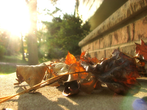 Fall, with a dreamy quality