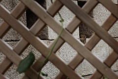 Squirrel In Jongno () - 3 (JCT(Loves)Streisand*) Tags: cute canon lens eos 50mm squirrel south korea seoul f18 jongno  450d