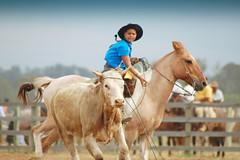 Tiro certo (Eduardo Amorim) Tags: boy brazil horses horse southamerica brasil caballo cheval caballos kuh cow rind cattle cows ox ganado cavalos oxen mucca pferde cavalli cavallo gauchos pferd menino riograndedosul pampa bois khe junge vache vaca garon vacas campanha brsil vaches boi chevaux gaucho buey ragazzo guri amricadosul mucche bag fronteira boeuf vieh gacho amriquedusud gachos boeufs buoi sudamrica rinder gado suramrica pi amricadelsur bueyes sdamerika mue bestiami btail americadelsud americameridionale piazito campeiros campeiro eduardoamorim iayayam yamaiay