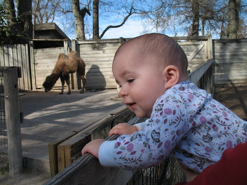 Ouida Mae checks out the camel