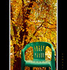 Tranquility (seyed mostafa zamani) Tags: life autumn cold color tree nature yellow leaf chair colorful iran tranquility iranian chapter پاييز زندگي ايران درخت سي رنگ صندلي طبيعت تي فصل صفا برگ رنگارنگ marand شرقي مرند ارامش اذربايجان ياشاسين تراختور گيلانار