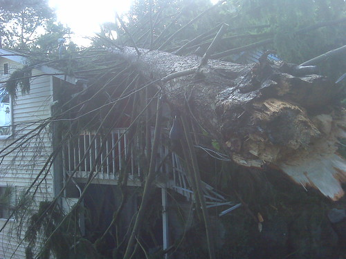Fallen Tree, courtesy of KIRO7