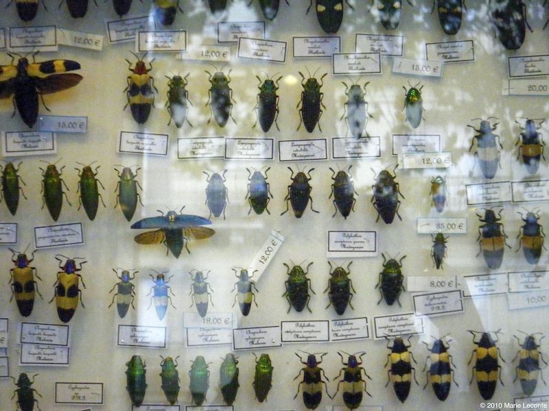 Dead bugs for sale
