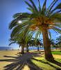 Ajaccio - Corsica (janusz l) Tags: park sun france palms geotagged corsica palm napoleon bonaparte ajaccio hdr intothesun janusz leszczynski 002500 geo:lat=41912833 geo:lon=8726234