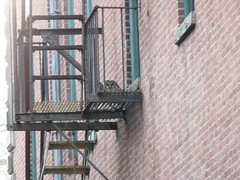 barred owl (quadceratops) Tags: bird nature boston hall massachusetts center raptor owl government faneuil barred 14hawks8owls