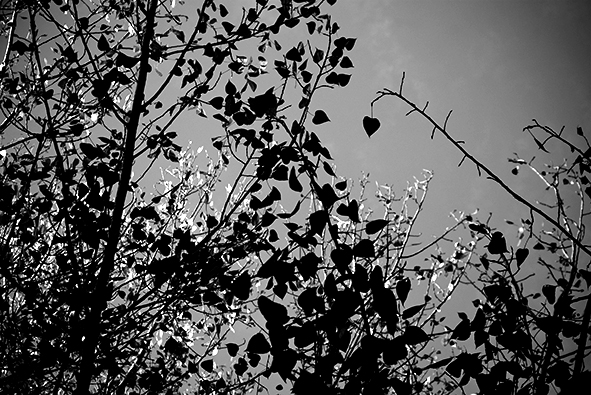 desafiando_al_otoño