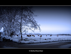 Winter's Coming... (DolliaSH) Tags: dollia sheombar dollias dolliash canoneos50d winter landscape sheeps cold snow sneeuw 50d canon holland nederland thenetherlands zuidholland southholland europe 1022 photo photos foto color colors photography vinter zimni talvi hiver vetur inverno vinteren invierno sneeu sne lumi laneige schnee neve lanieve koud ijs bevroren frozen dutch schapen weiland farm boerderij tree