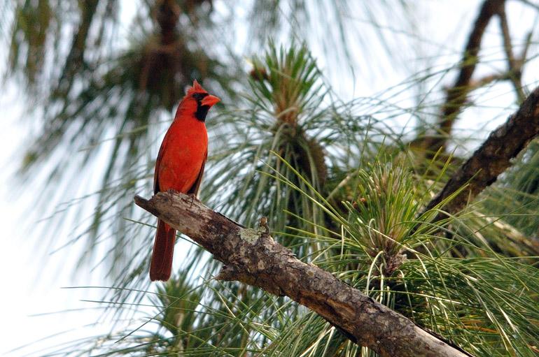 cardinal_0046_2319