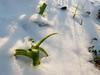 erba fresca con la neve