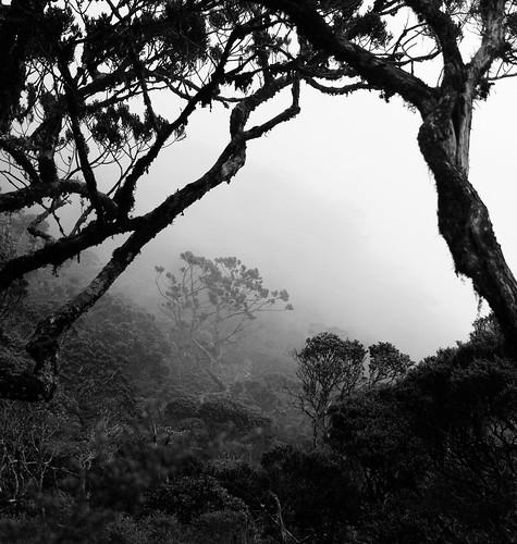 Mount Kinabalu 04