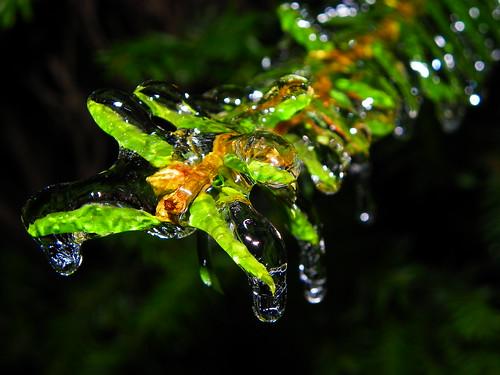Ice Rain (2)