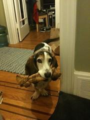 Bacon has a bone