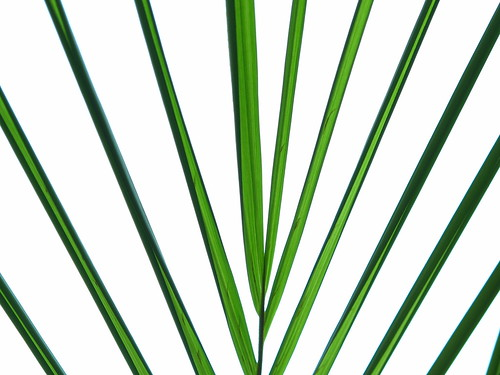 IMG_7878 Palm Leaves