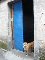 china295