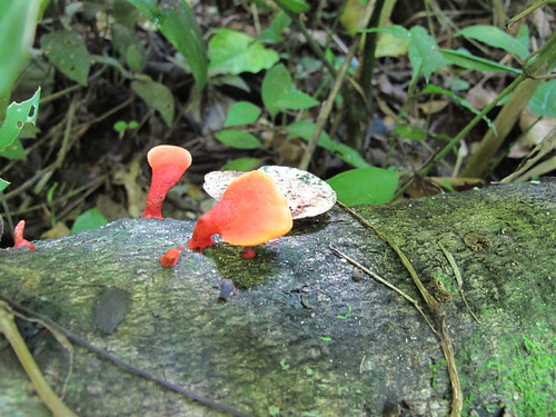 Jungle Mushrooms