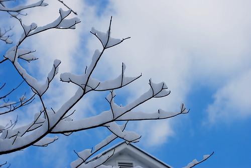 a decent snow! 066