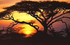 Ndutu sunset - Tobi backpacking Africa