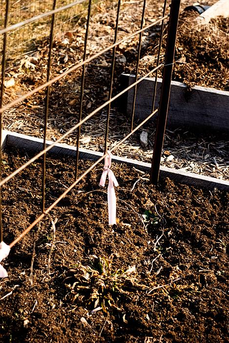 2010 gardening march 5  2