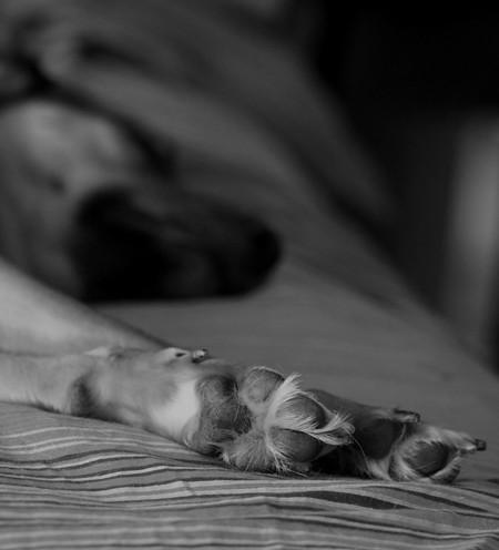 Celeste Feets!