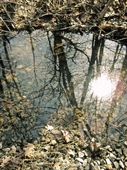 Stream Reflection (heatherm815) Tags: trees sun reflection water leaves outside spring sticks woods rocks stream warm sunny pebbles