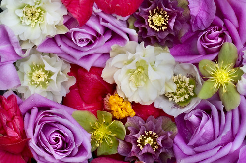 Floral Medley Variations