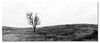 Look Left Up Down and Right ([ Kane ]) Tags: wild blackandwhite white black tree grass dusk pano country australia brisbane qld queensland kane rollinghills thirds gledhill kanegledhill kanegledhillphotography