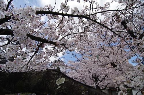 稲荷櫓/ウメノキゴケ