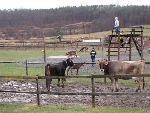 farm playground 4