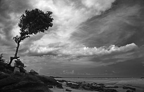 IMG_2682-w Bintan BnW