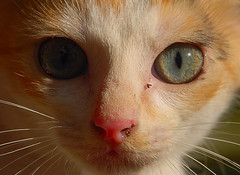 Meow... (GOPAN G. NAIR [ GOPS Photography ]) Tags: cat photography gopsorg gopangnair