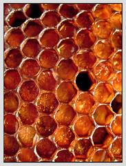 honigwaben - honeycombs (sulamith.sallmann) Tags: food orange abstract macro texture essen pattern geometry shapes struktur structure honey backgrounds forms form shape makro muster surfaces abstrakt hintergrund combs geometrie honig formen oberfläche geometrisch textur süs hintergründe goldgelb sulamithsallmann süses honigwaben