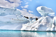Glacier Cruise...Greenland... (christine zenino) Tags: europe arctic greenland inuit 1000views grnland dogsled grnland groenland groenlandia 1000plusviews angmassalik tasiilaq grnland ammasalik  tasiilaqgreenlandtravelguide greenlandtravelguide villageoftasiilaq greenlandichuskypuppy inuitvillage