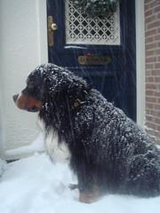 sneeuwdoes_voordeur