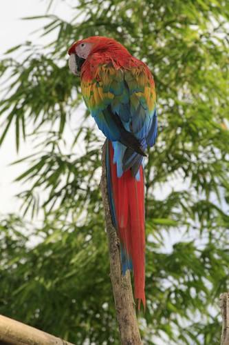ecuador-birding