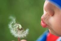 make-a-wish
