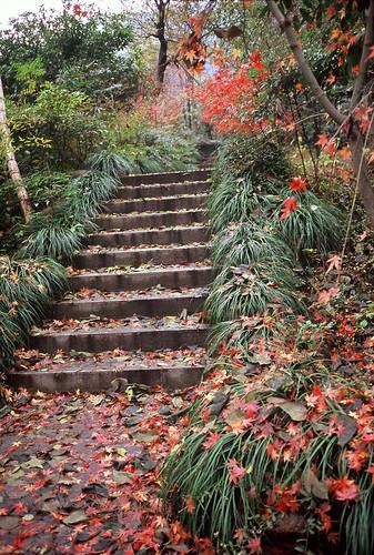 rvp-steps
