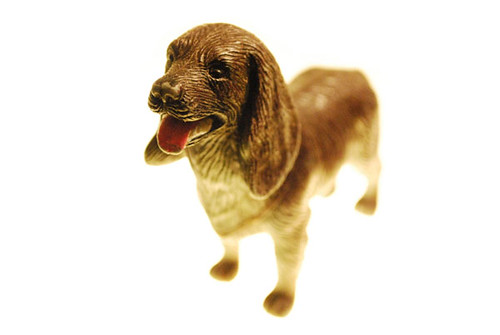Bright Puppy