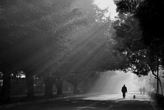 ~~ piercing the mist ~~ (tints n tones) Tags: road trees blackandwhite dog mist monochrome silhouette vanishingpoint delhi winters lightbeams lightrays morningwalk d90 asiangamesvillage nikond90bw
