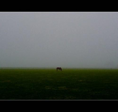 _the_mist