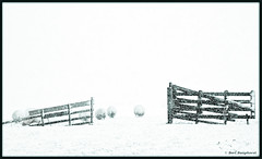 Kindness is like snow - it beautifies everything it covers--Anonymous (bert.raaphorst) Tags: all sheep snowstorm rights nikkor reserved tqm sneeuwstorm molenpad zoeterwoude tmba winterinthenetherlands nikkor70300vrii sheepinthesnow ifitisbrightaddlight purewhitesnow